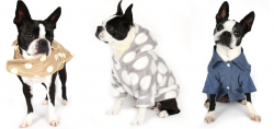 Pet Apparel Company